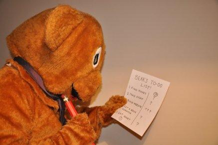 bear-checking-his-estimates
