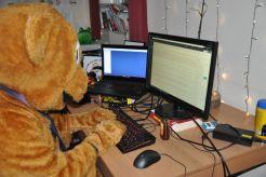 bear-writing-a-blog-post